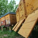 Bienengarten Bienenstöcke